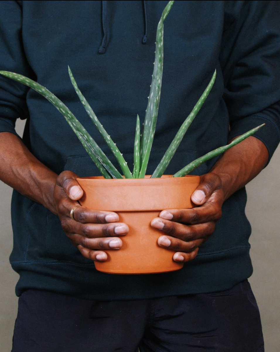 man holding a potted aloe vera plant