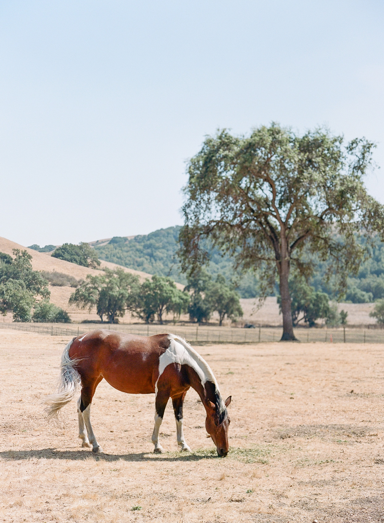 brown and white horse on ranch