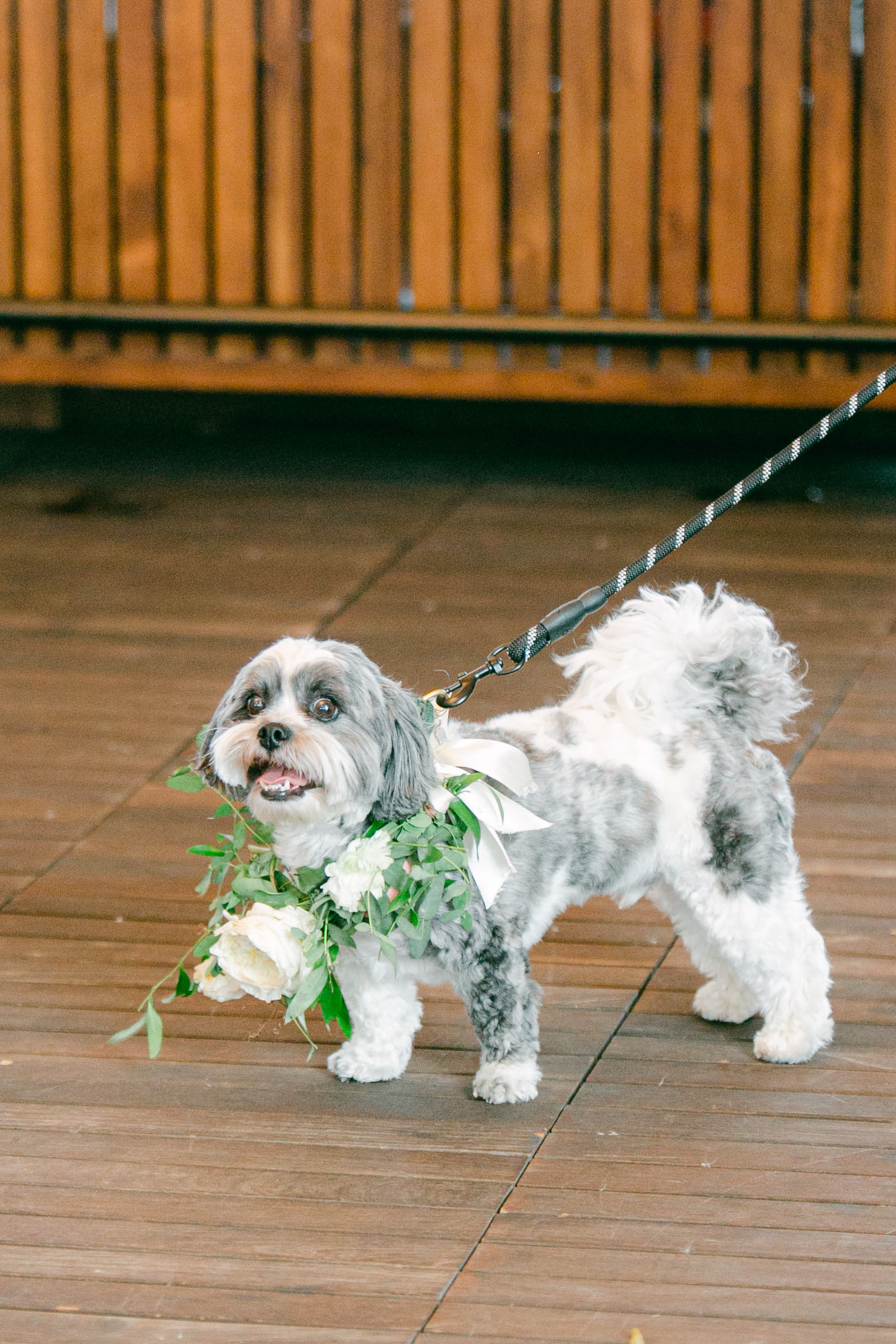 dog on leash for wedding wearing white floral wreath