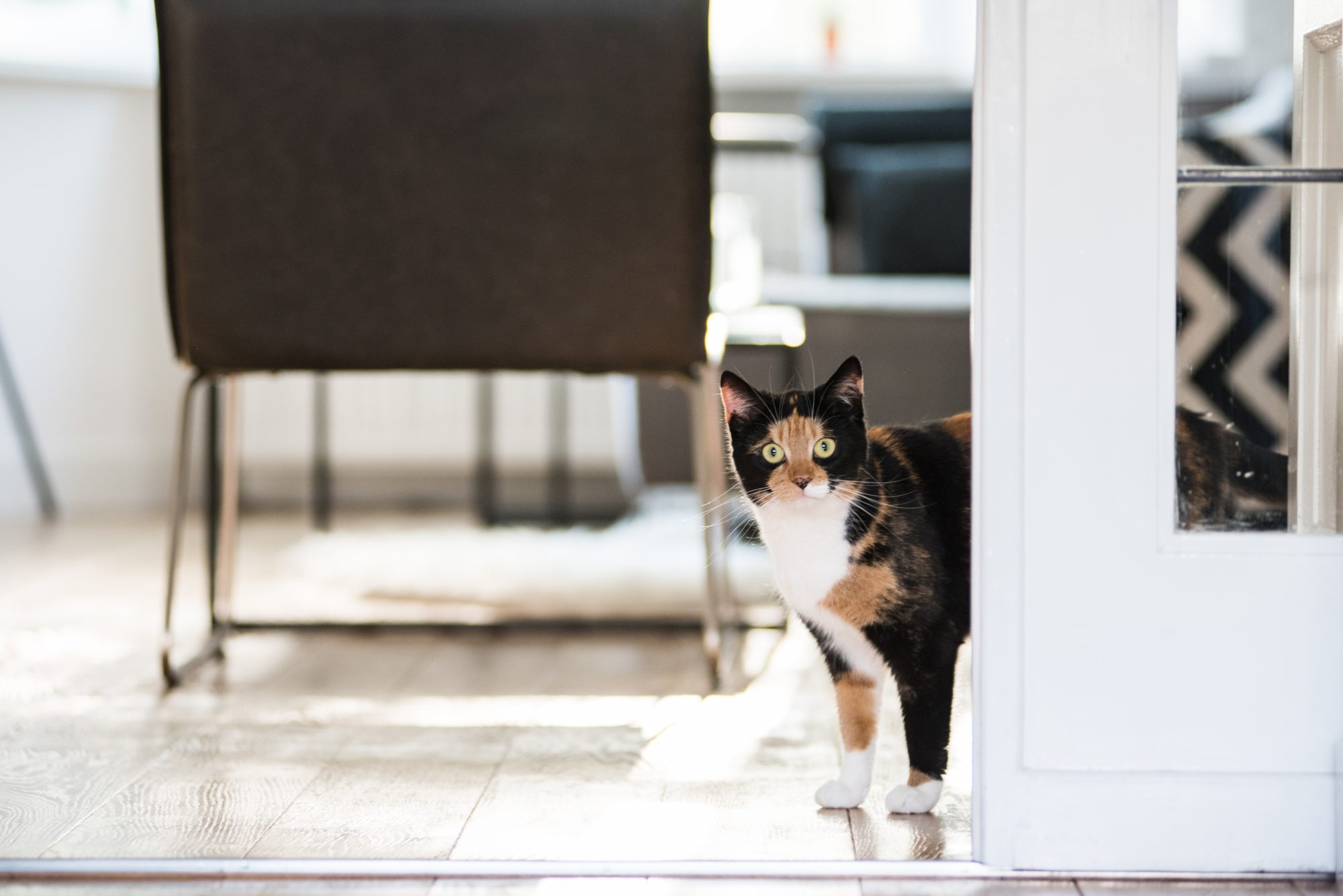 cat standing and staring in a living room