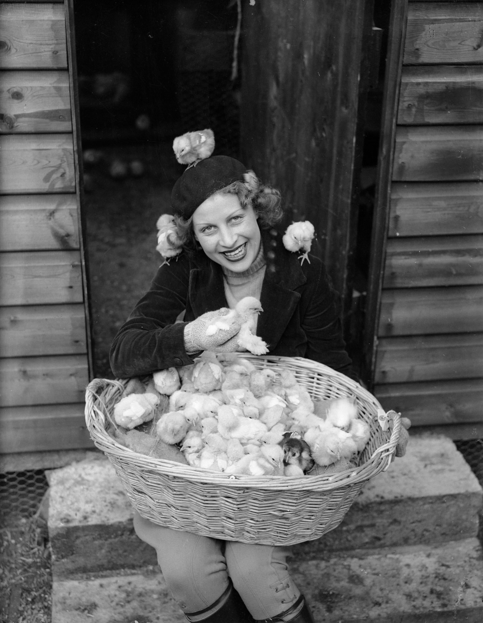 woman with basket full of chicks 1937