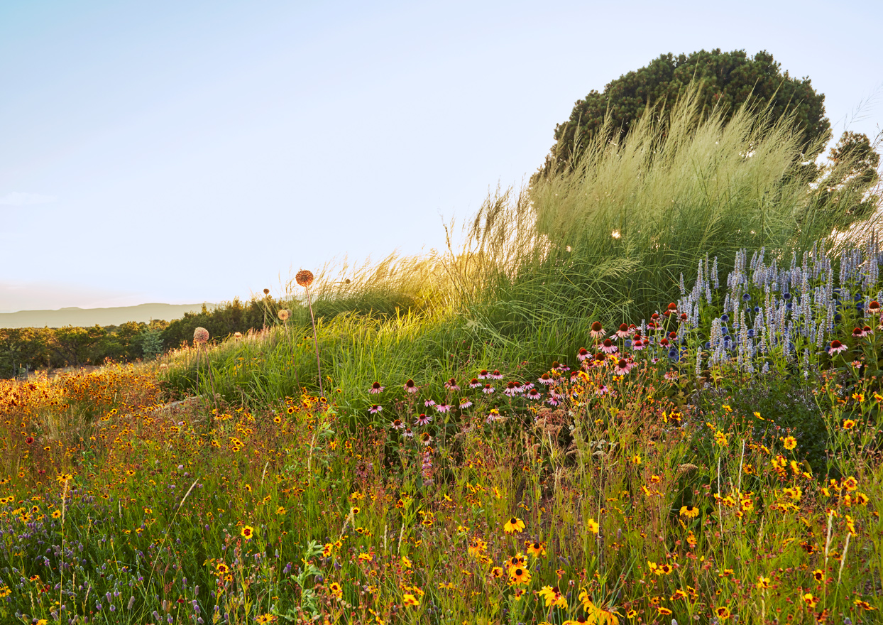mix of native wildflowers