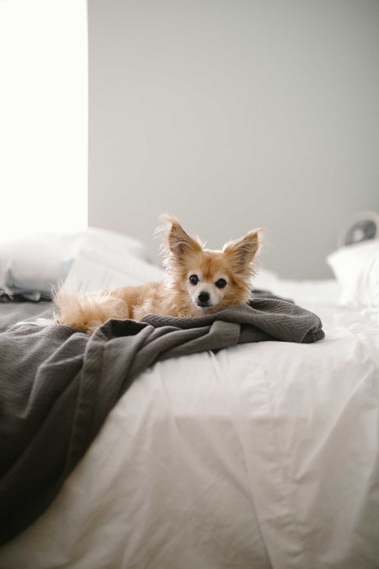 small dog in the bed