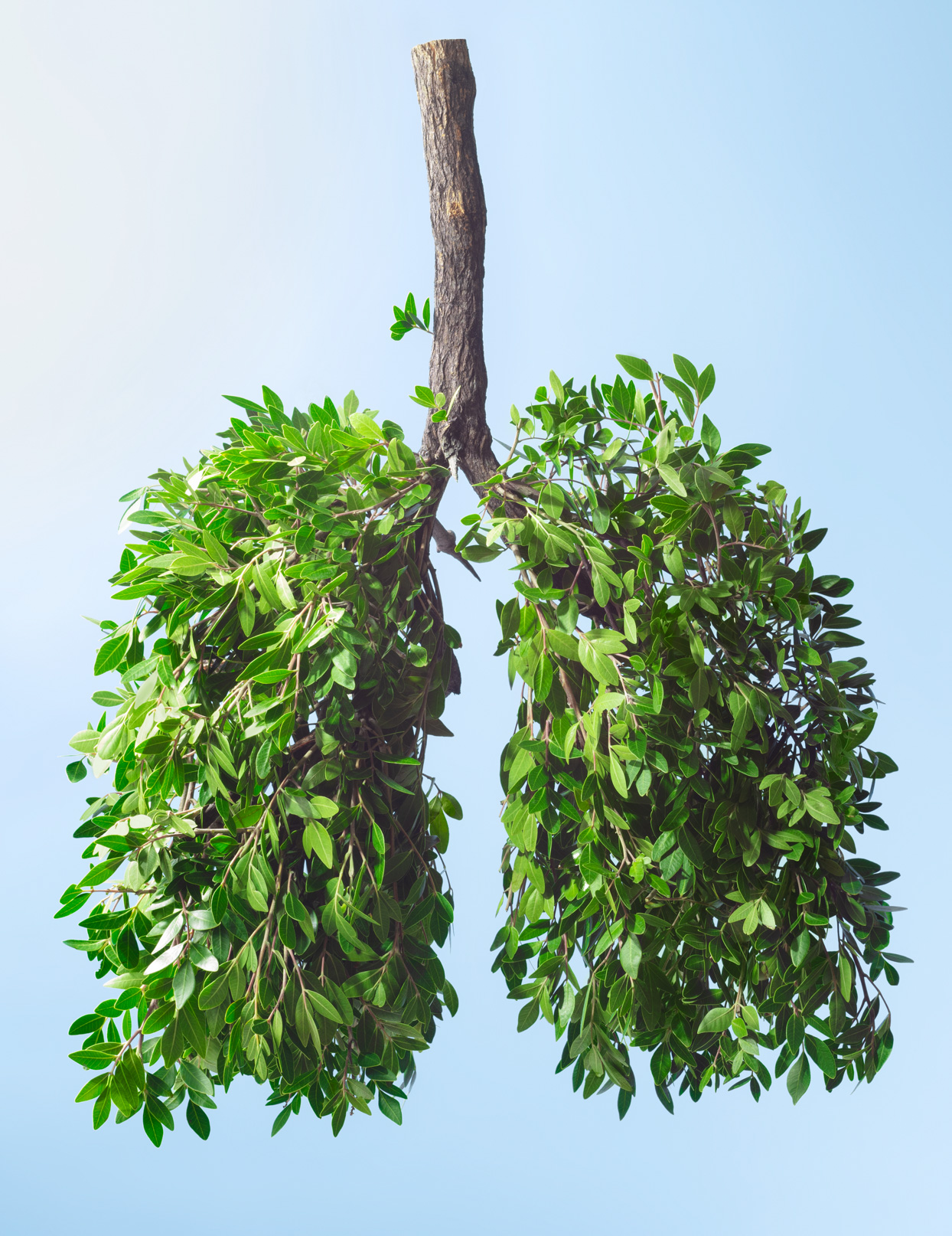 lung shaped tree