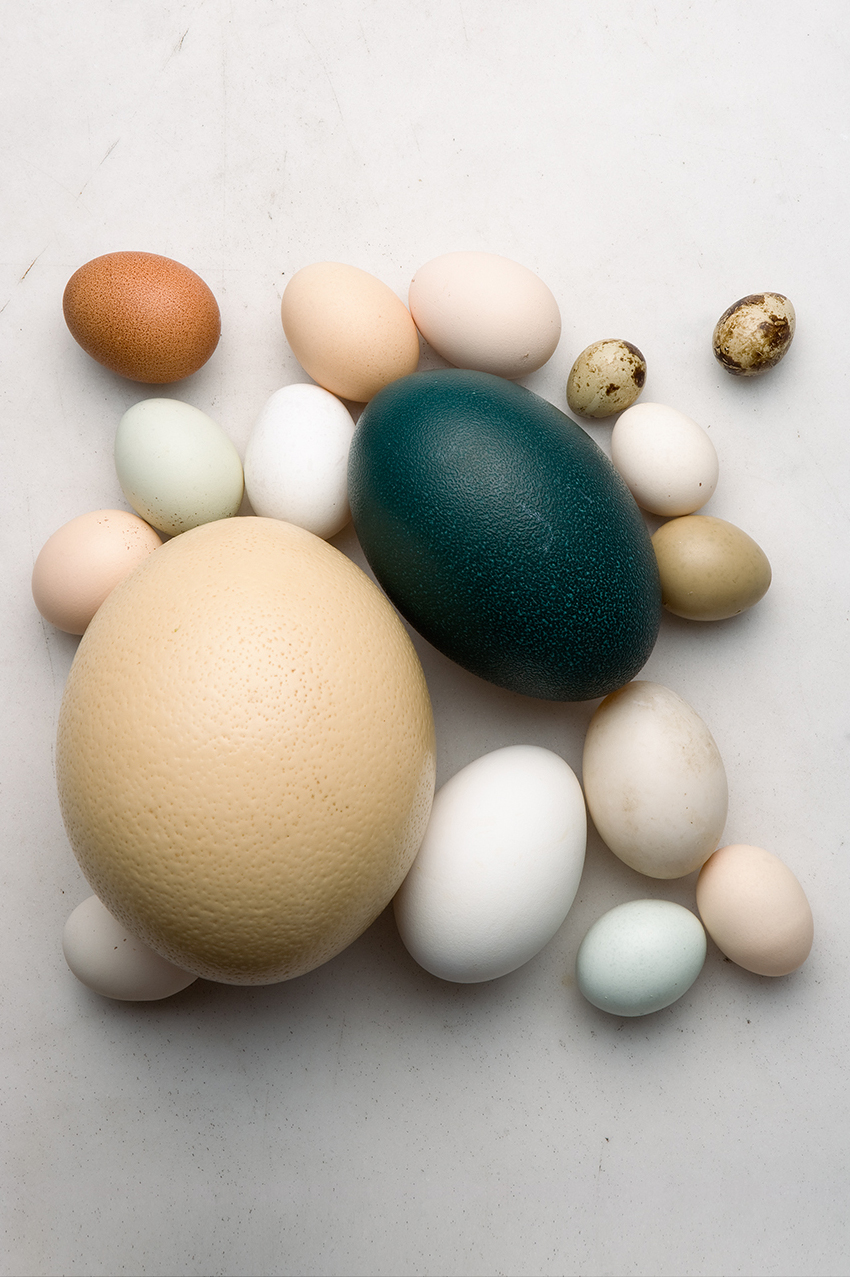 variety of different egg types on slate surface