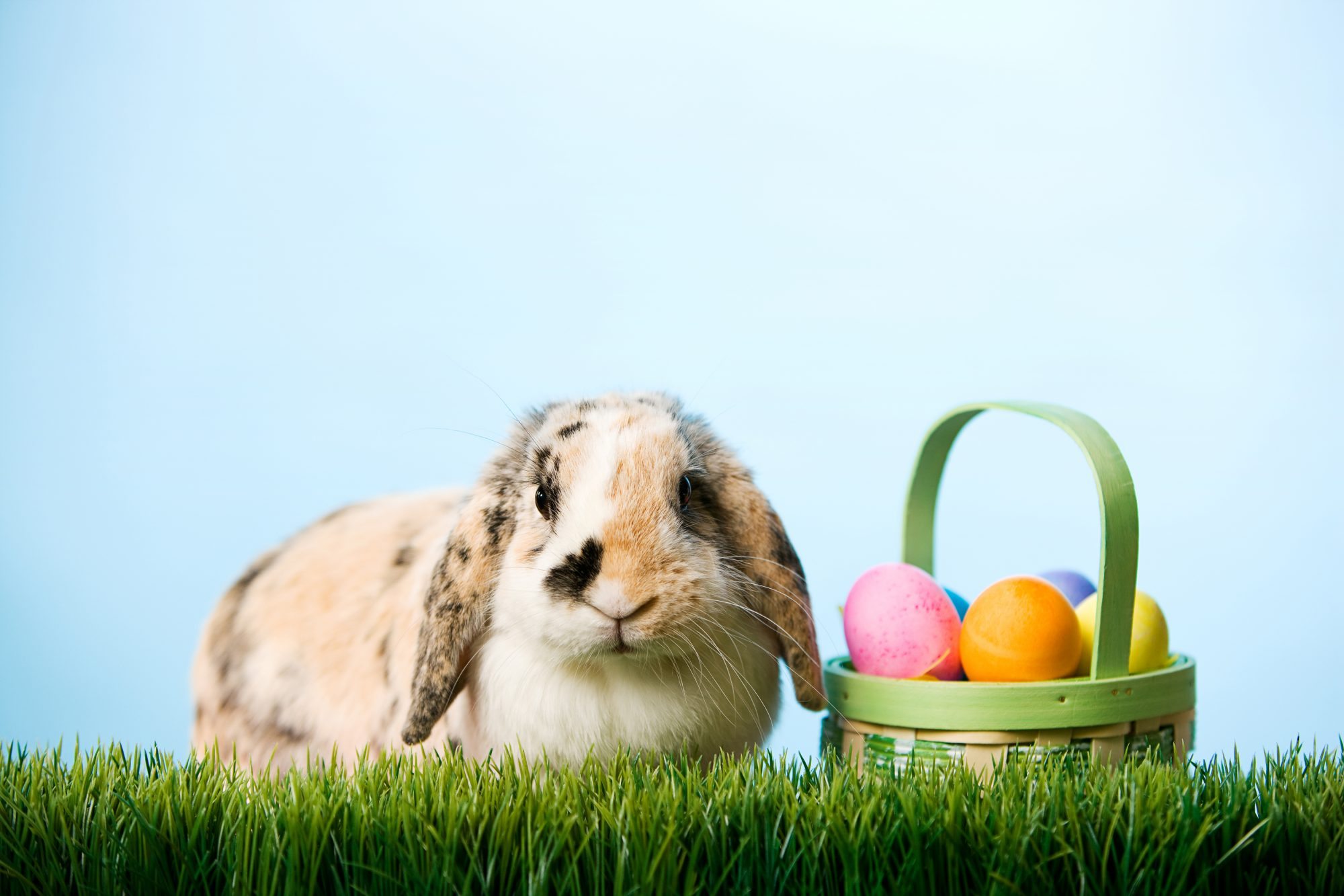 bunny with basket of Easter eggs