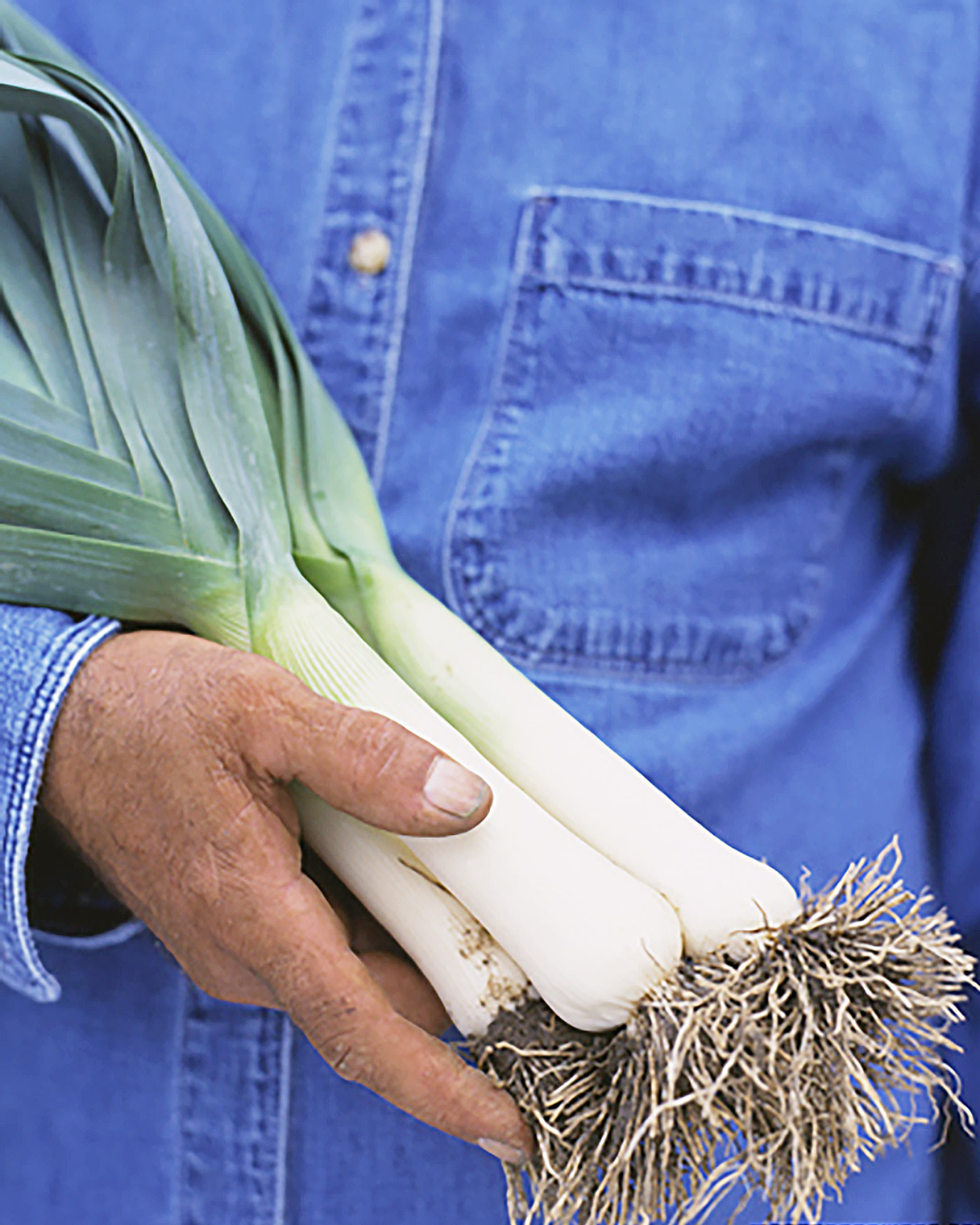 holding leeks in hand