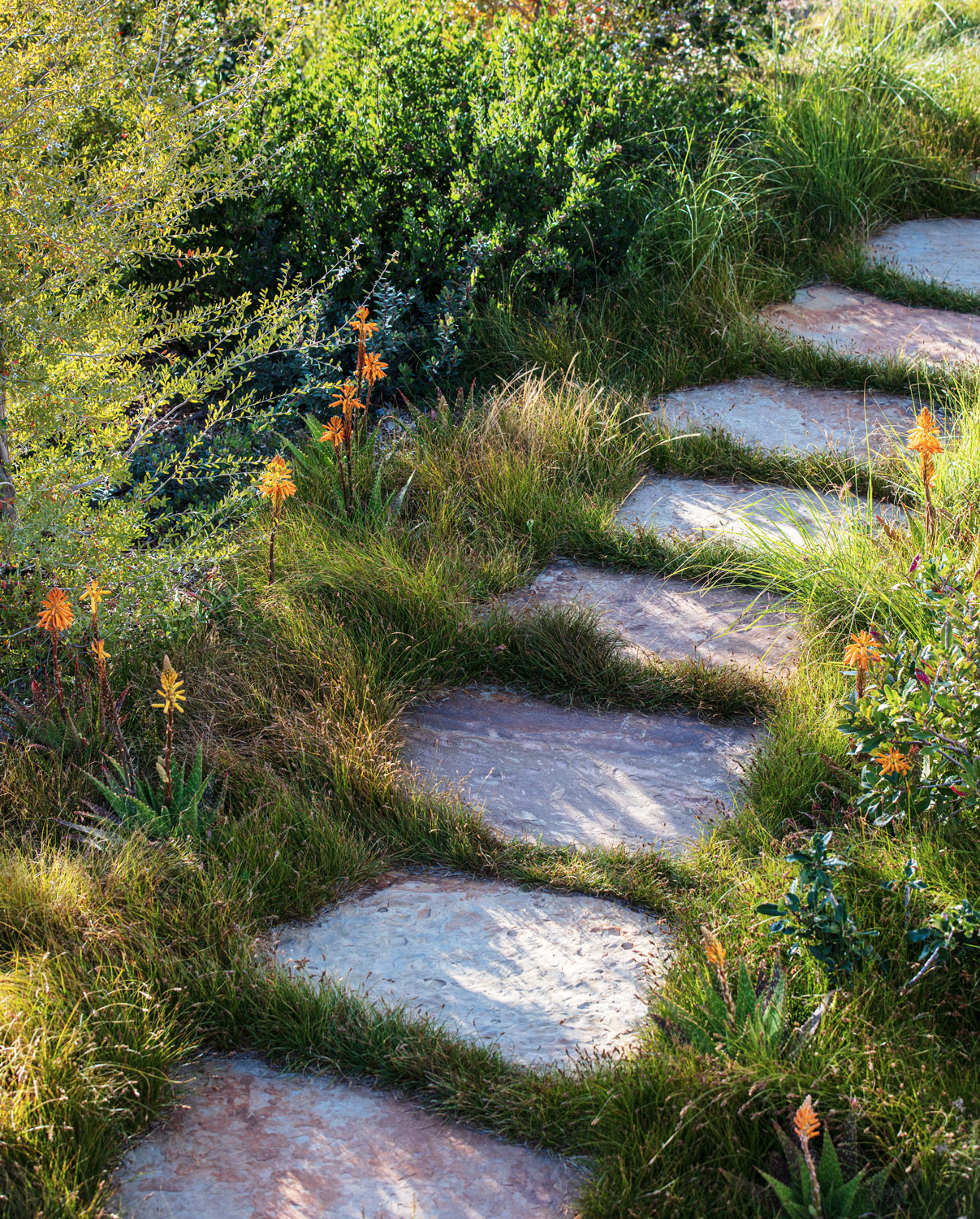 shrubs and grasses lining flagstone path in garden
