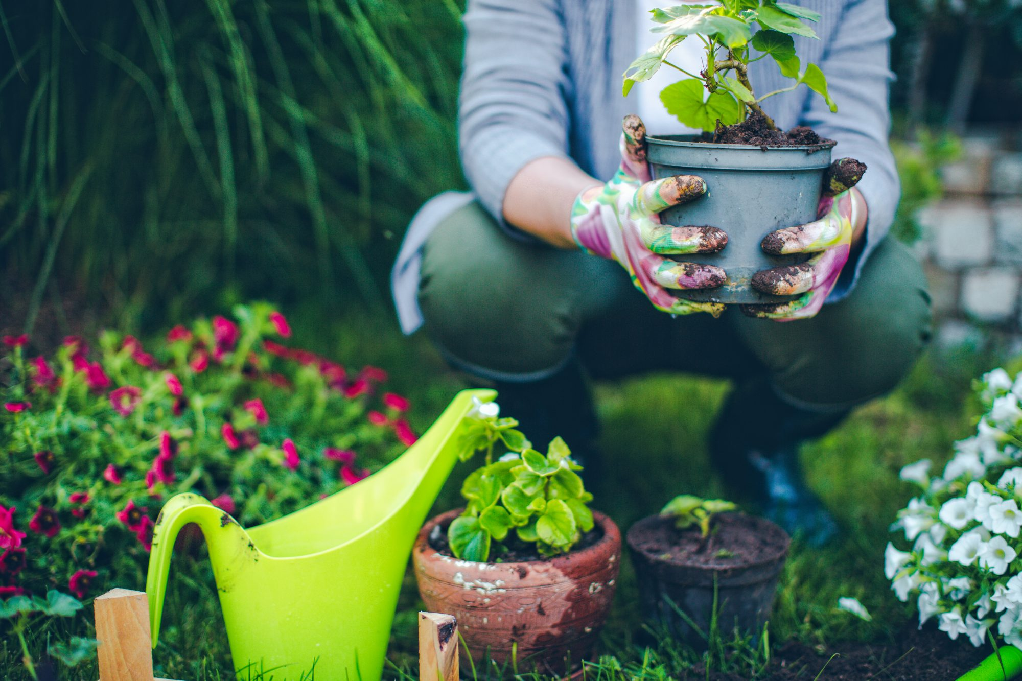 woman crouching while planting flowers garden