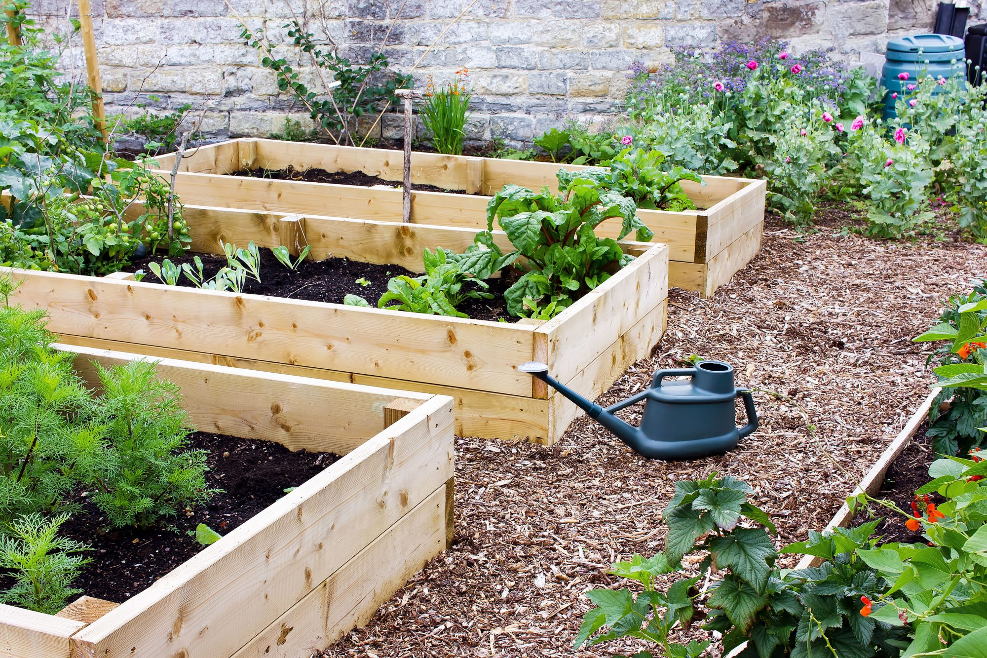 backyard raised garden beds