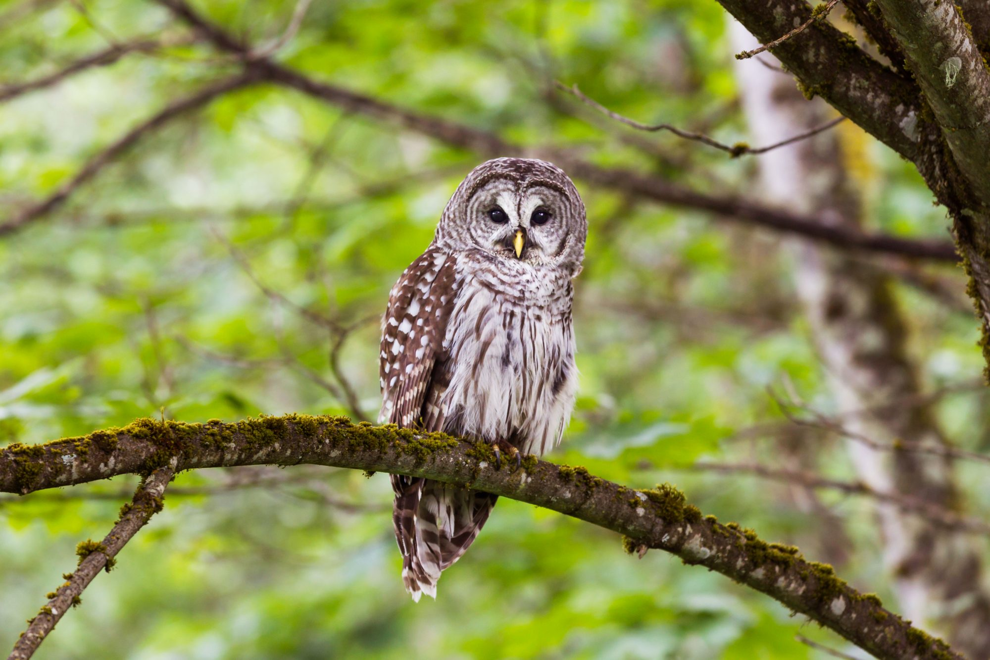 owl resting on tree branch