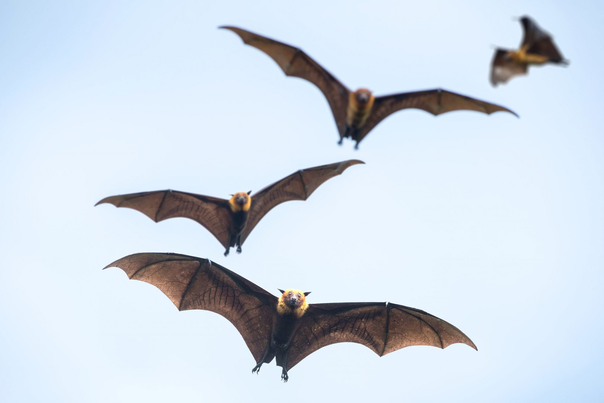 group of bats flying