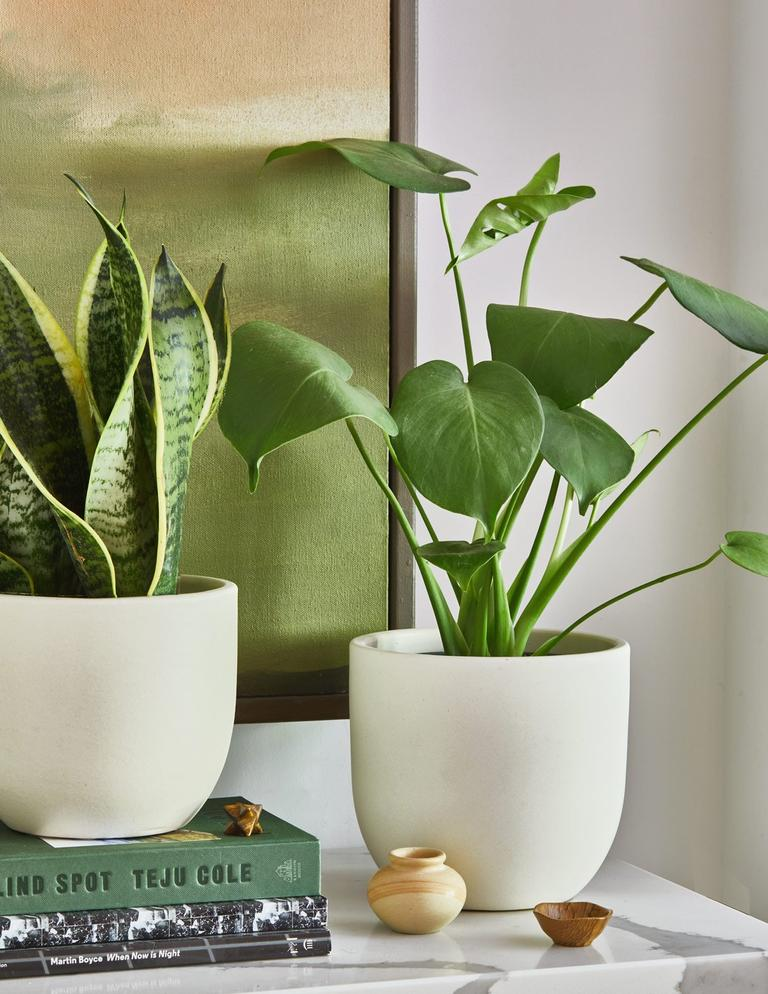 The Sill Houseplant Subscription
