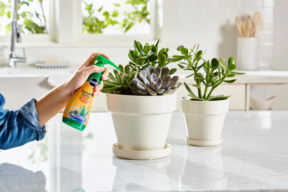 Miracle-Gro Succulent Plant Food