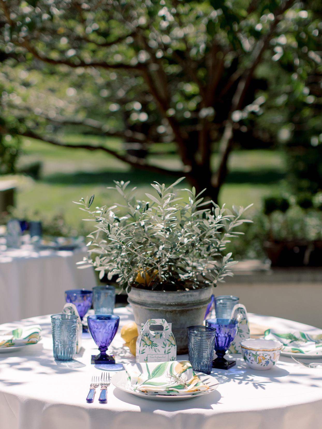 guest table with blue glassware and potted plant centerpiece