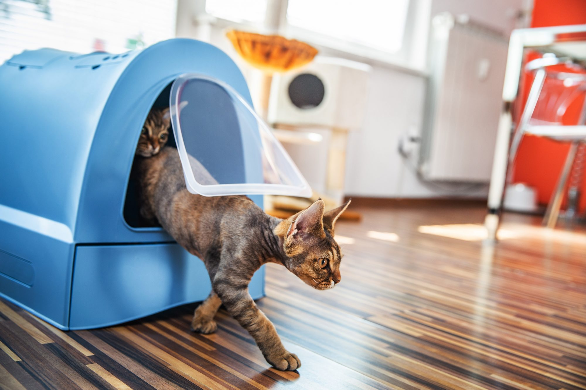 cats stepping out of litter box