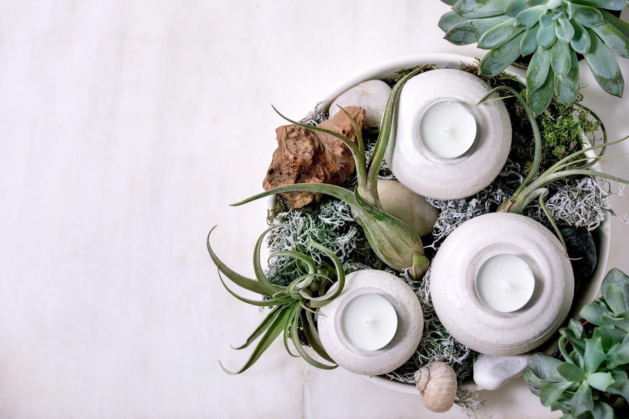 air plants in pot