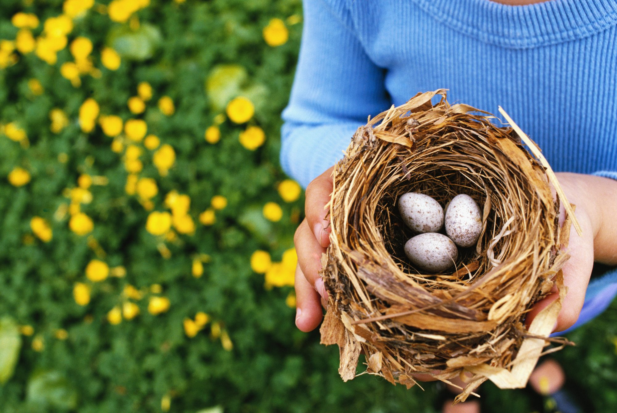 woman holding birds nest with eggs