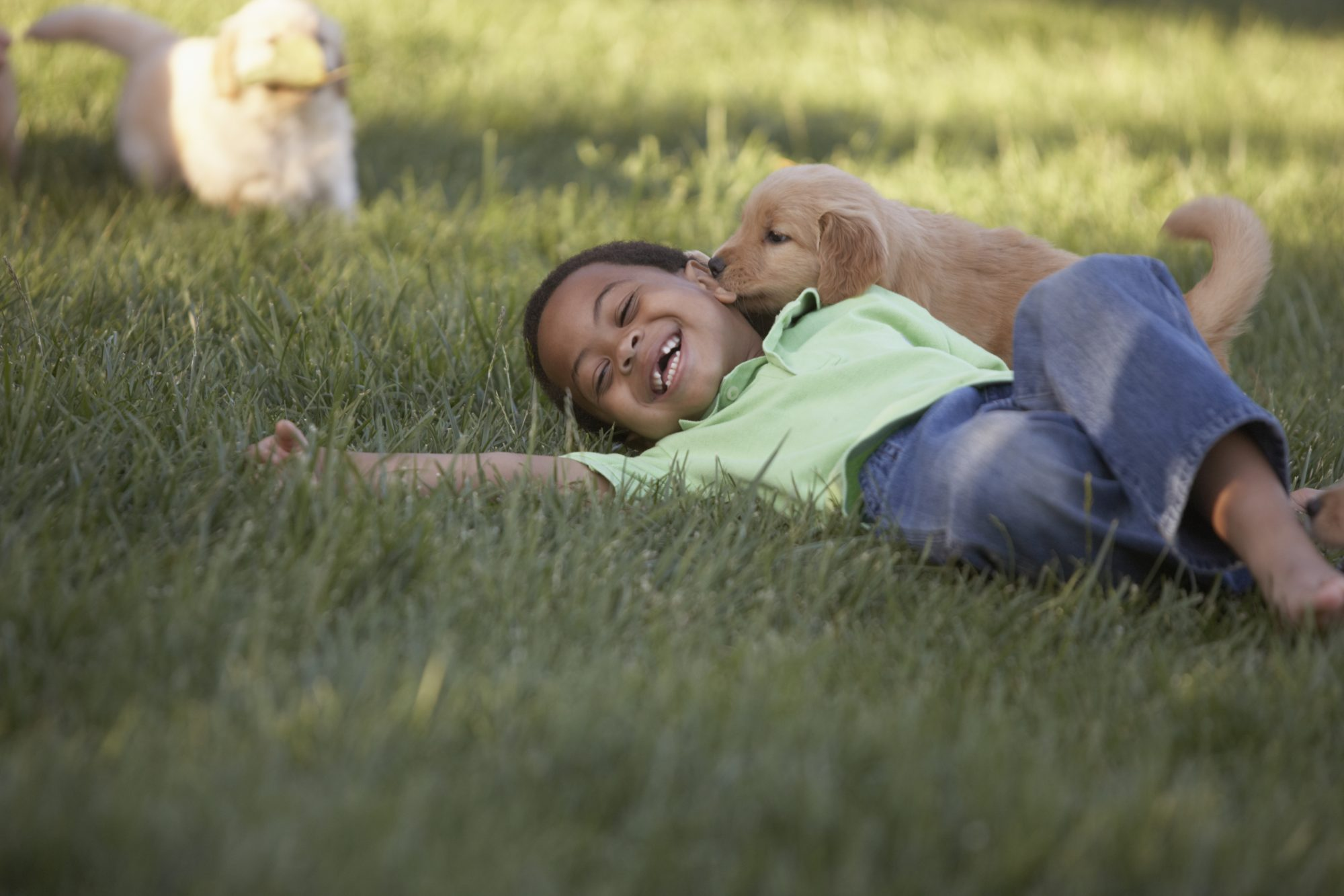 boy playing with puppies in grass
