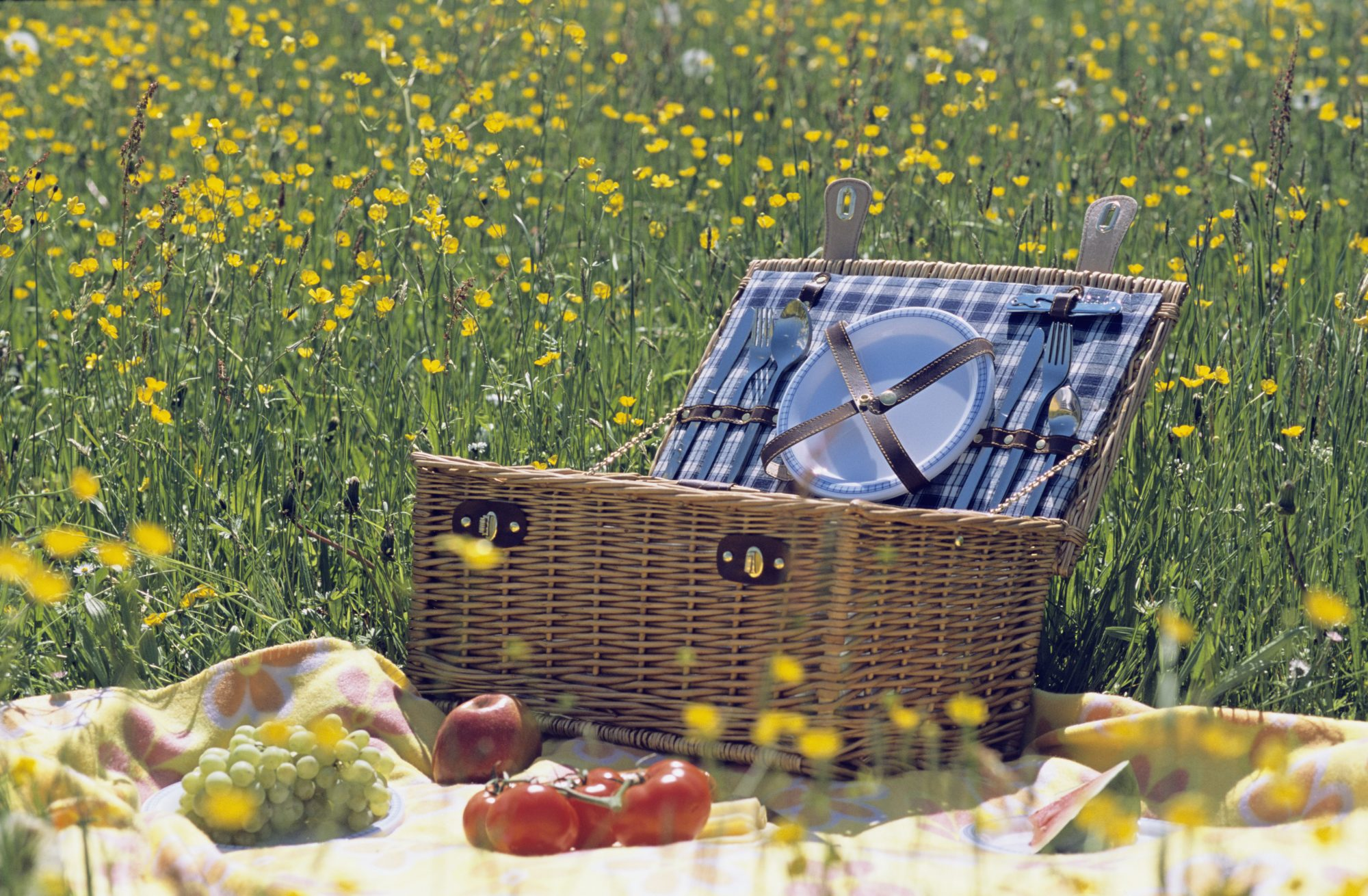 Picnic basket and fruit in meadow