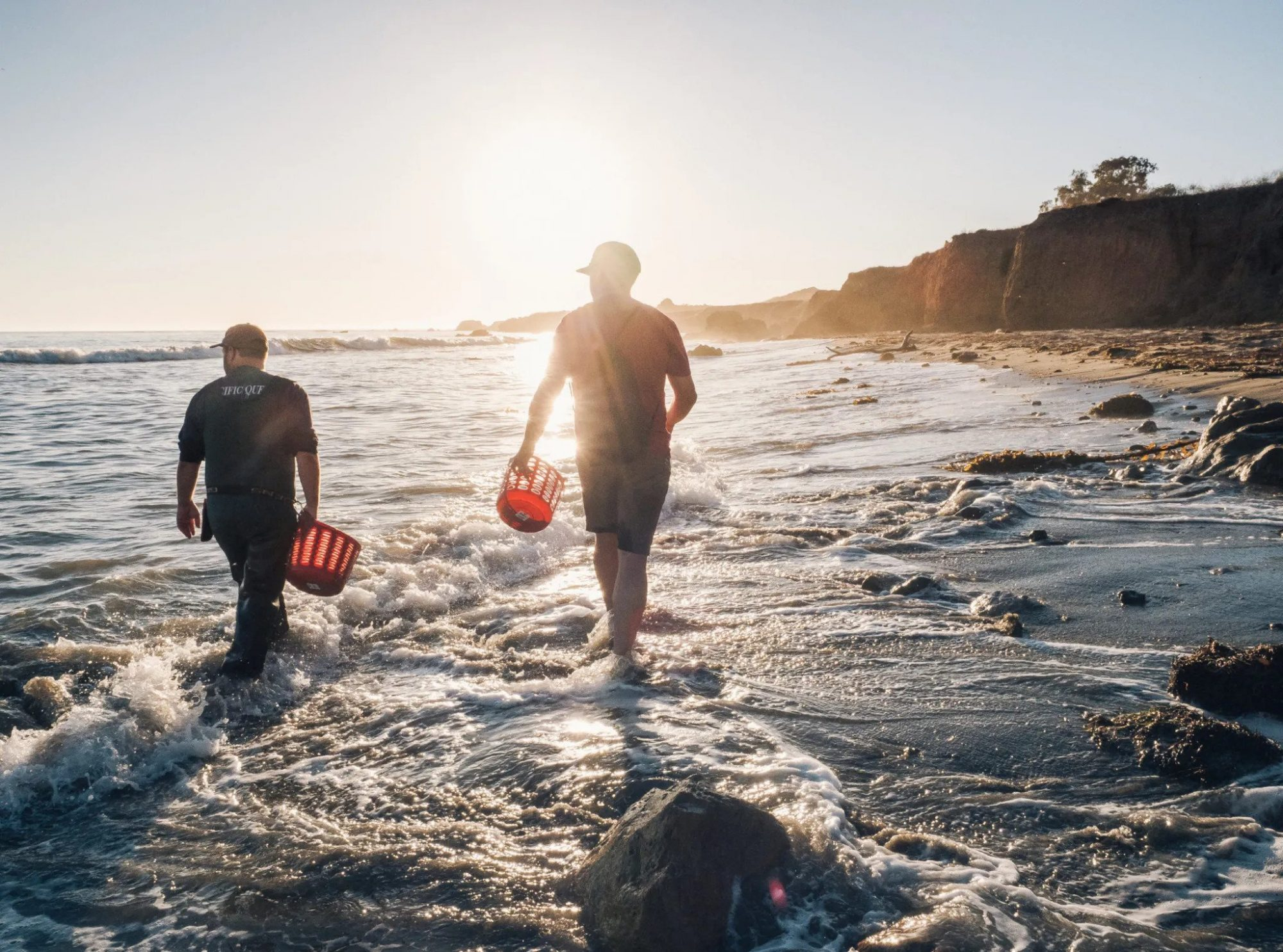 foraging for seaweed in Paso Robles, California