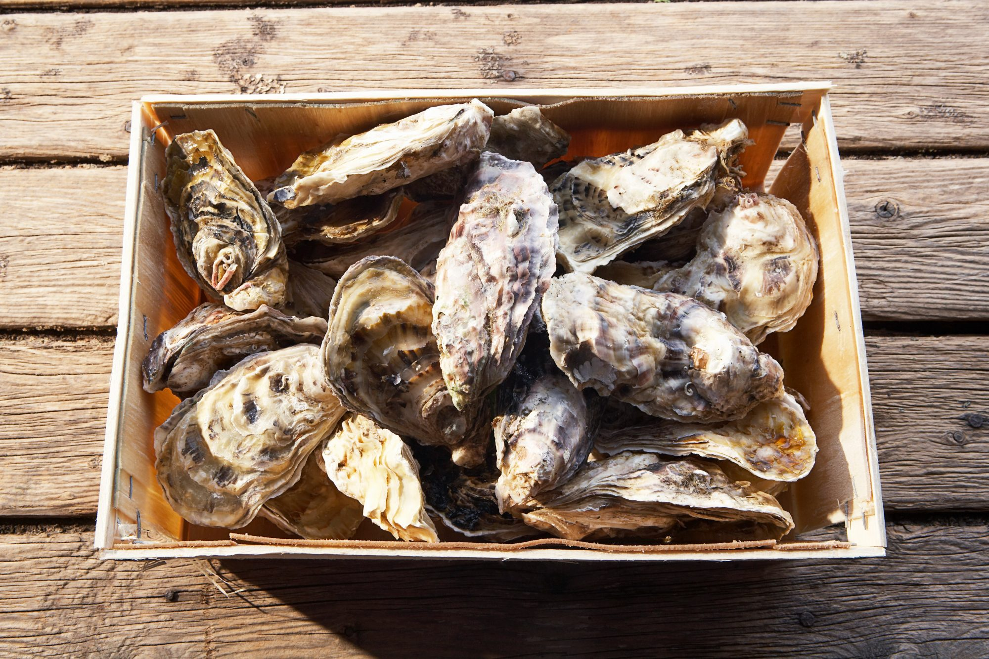 crate of fresh oysters on dock