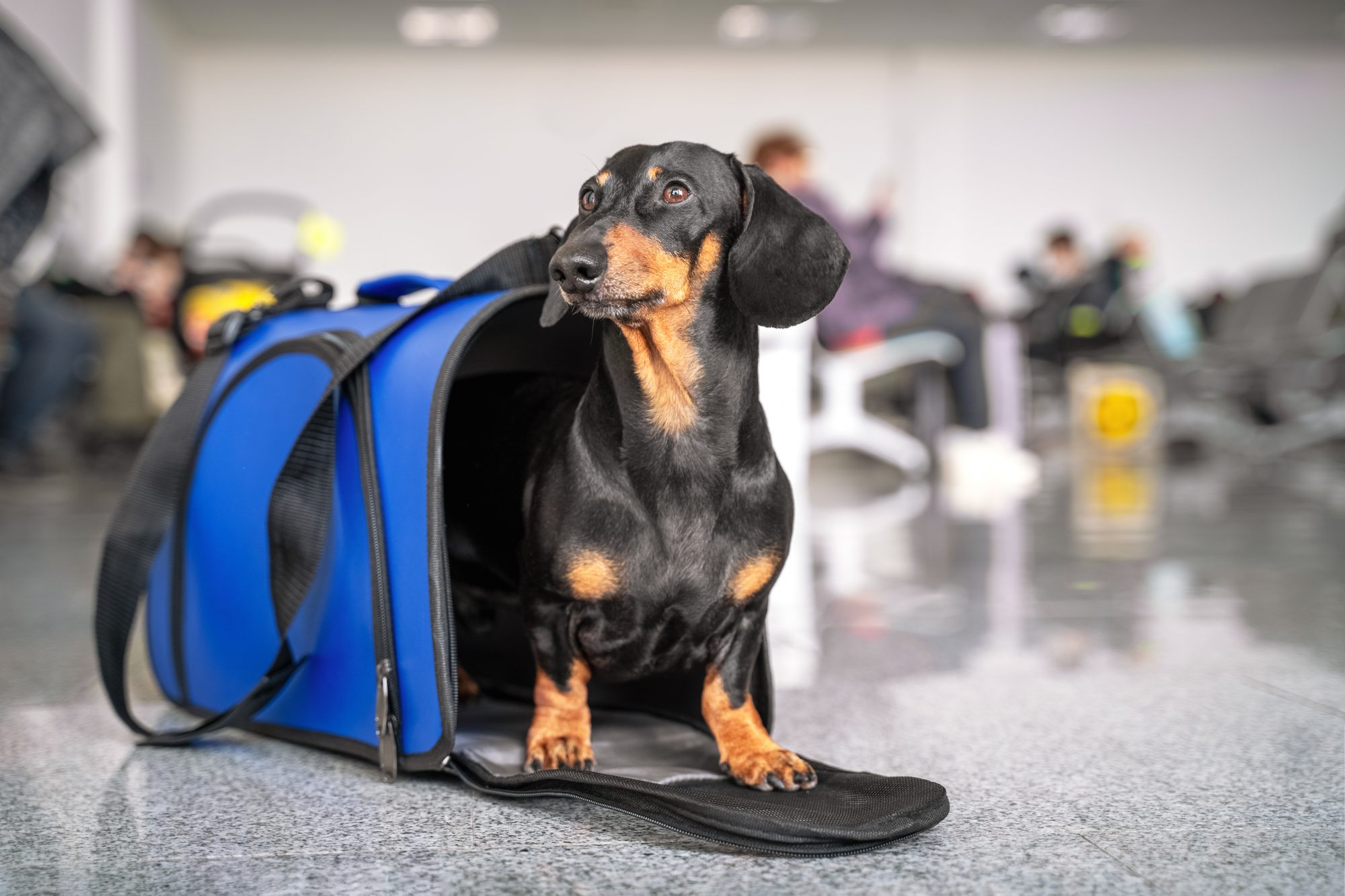 dog in pet carrier at airport