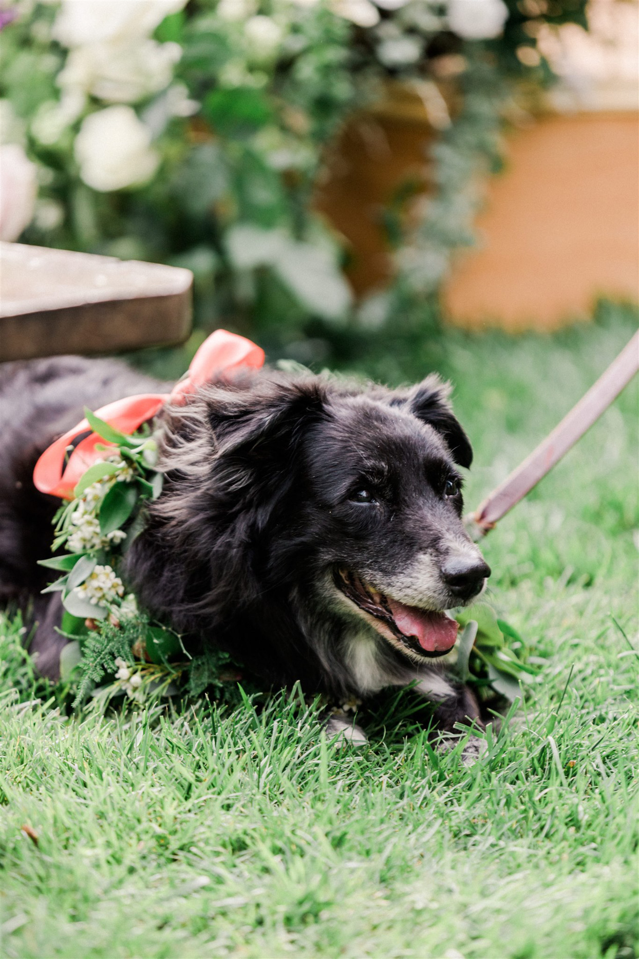 dog of honor with pink bow