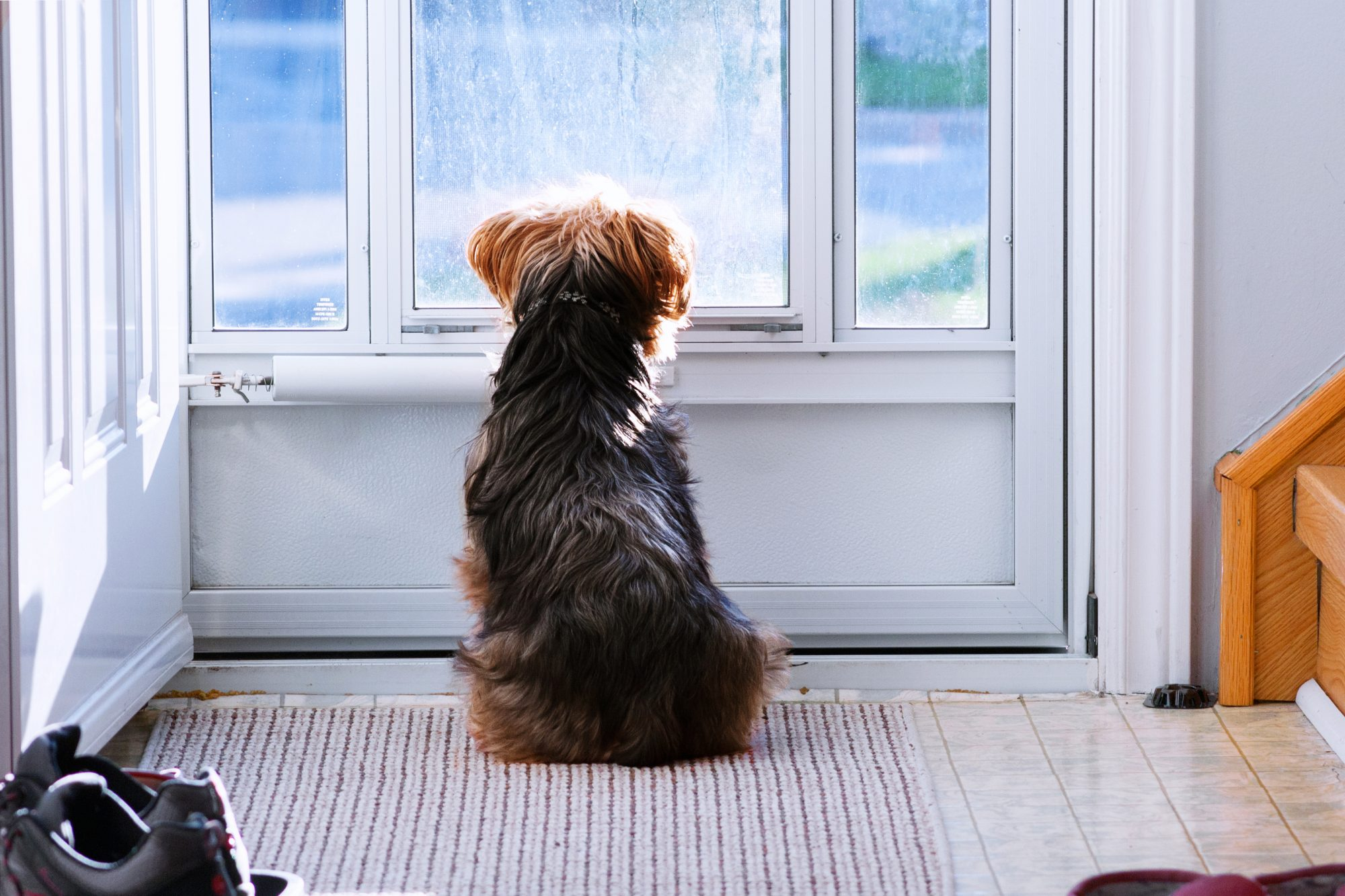 dog waiting for owner by door