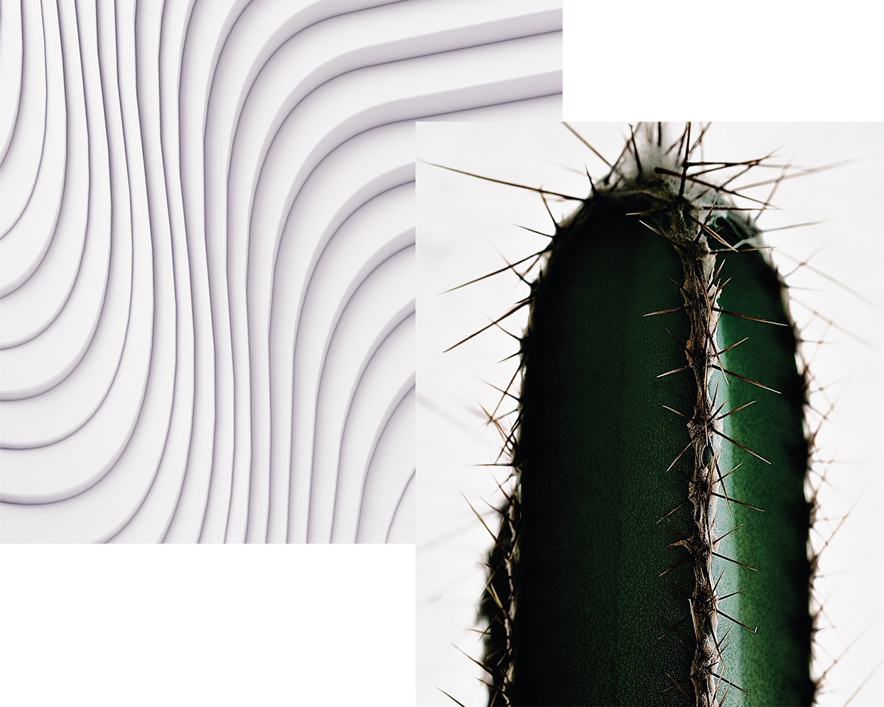 conceptual white waves graphic next to close up of cactus
