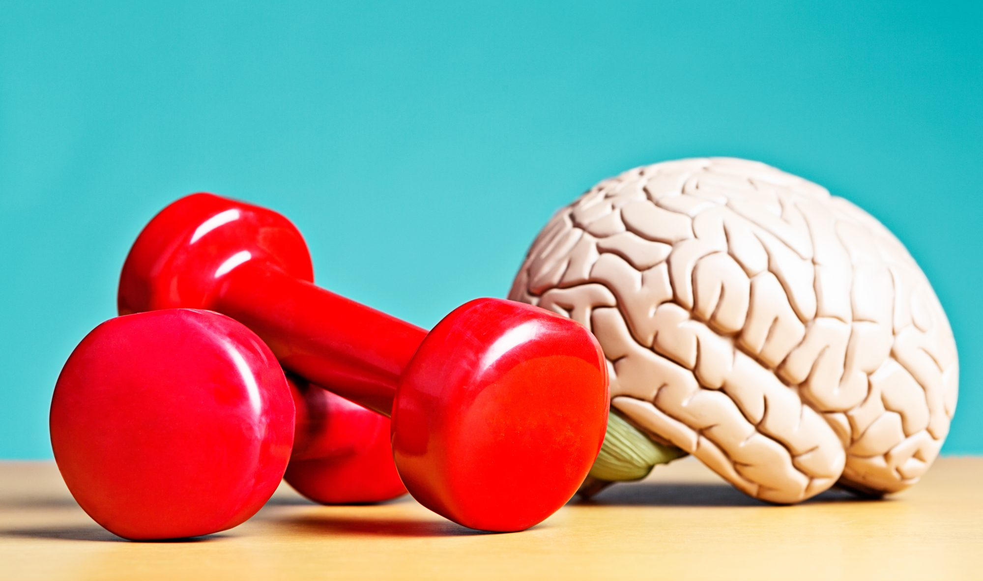 model brain with red dumbbells