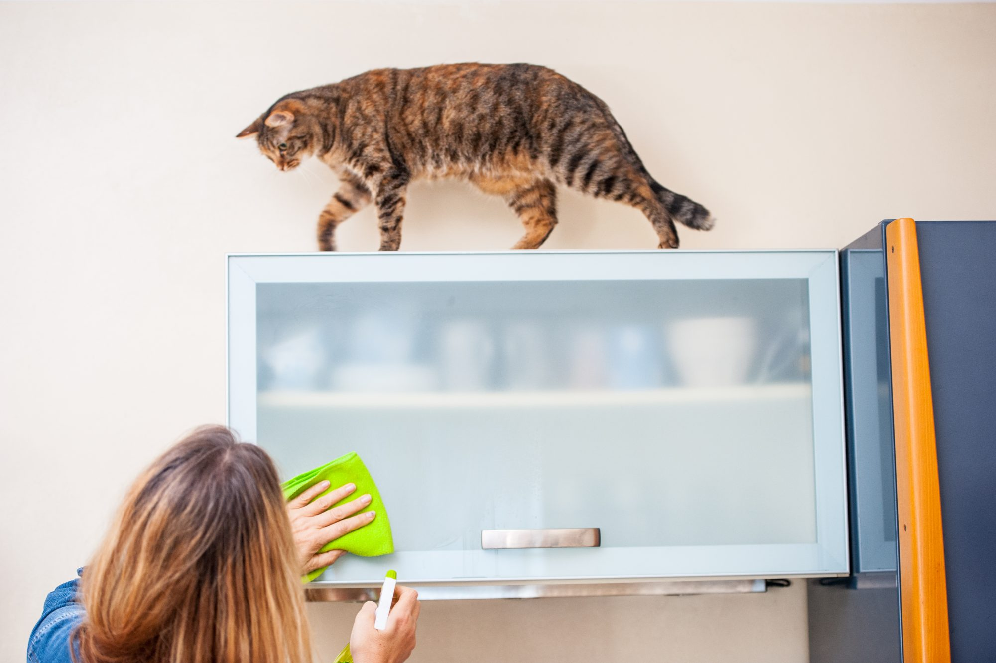 cleaning kitchen cabinets with cat playing