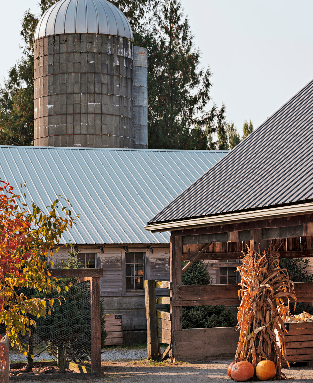 pumpkin patch barn and shops