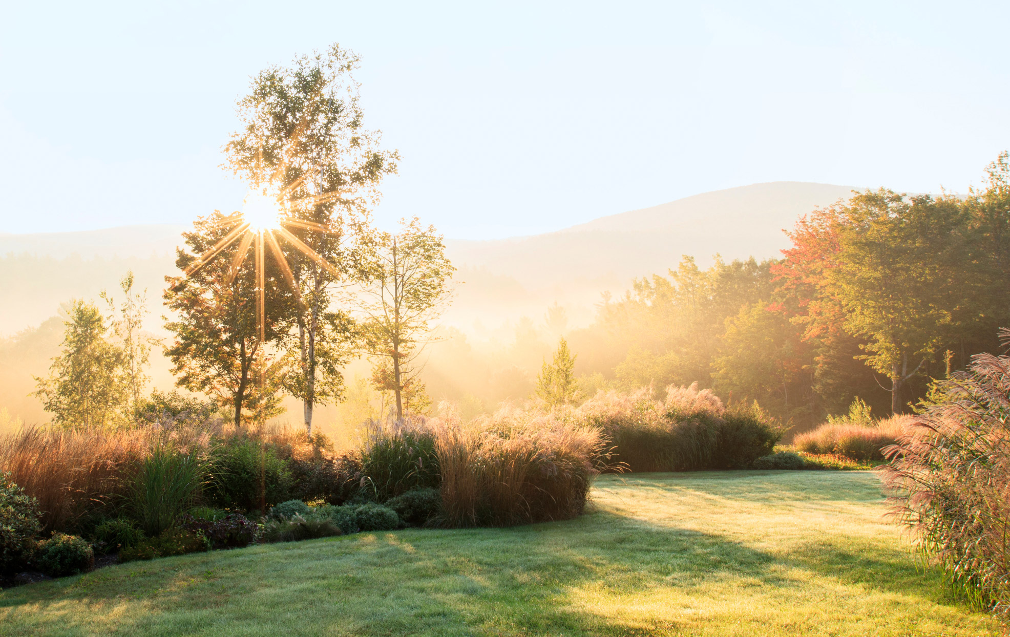 misty sunrise through the trees in the meadow