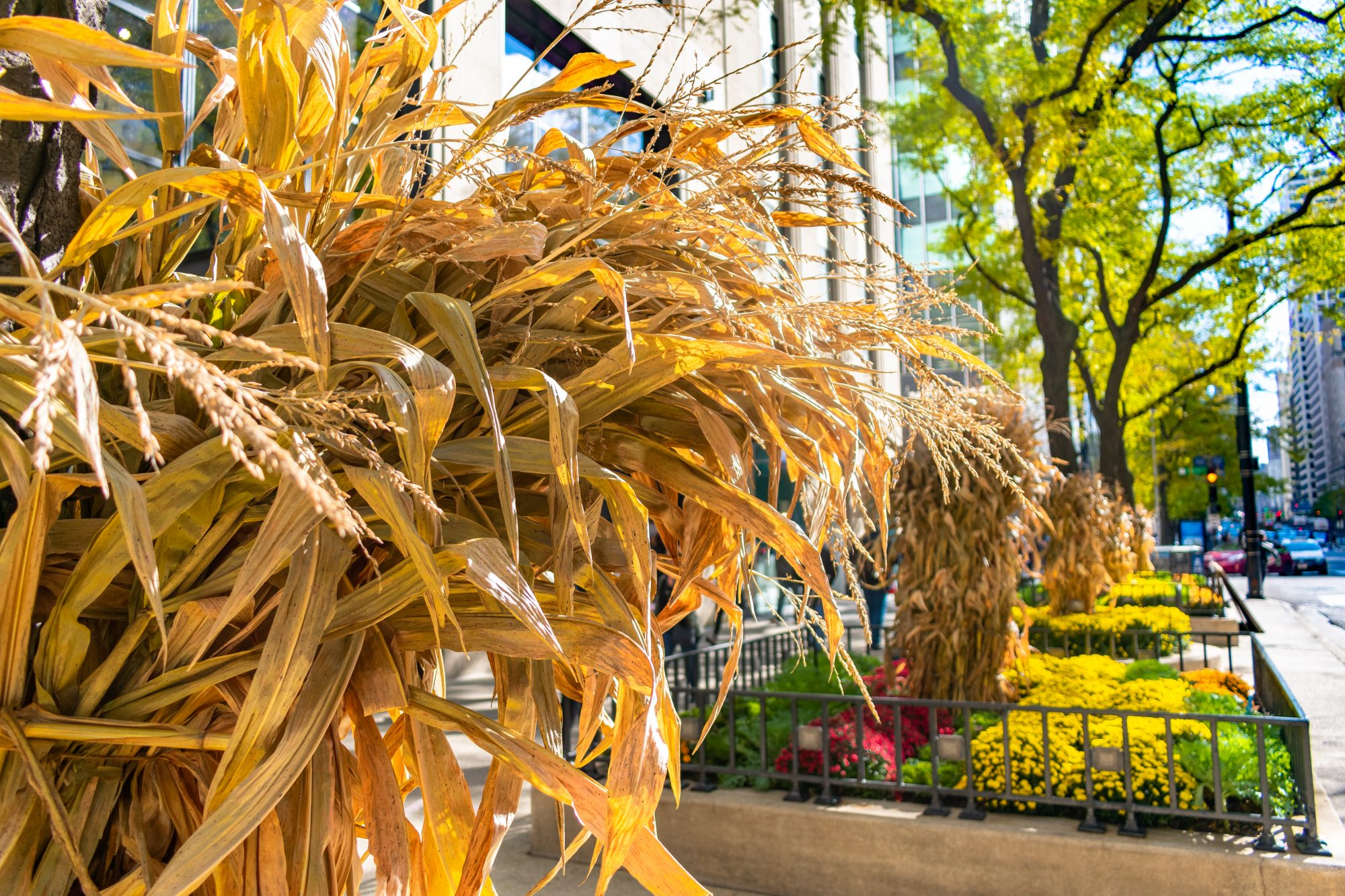 dried corn stalk decorations outside building