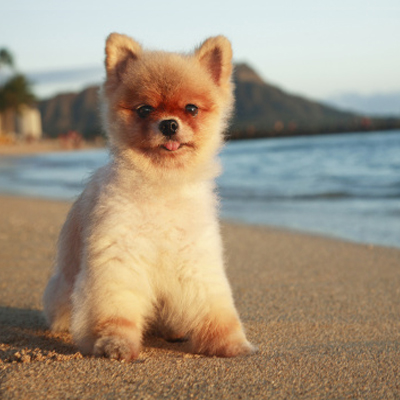 Dogs Lower Your Risk of Diabetes
