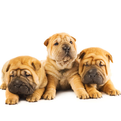 Puppies May Replace Your Pain Meds