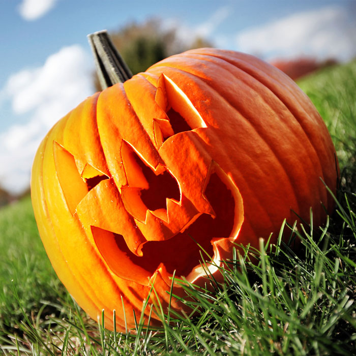 8 Facts About Pumpkin That Will Blow Your Gourd