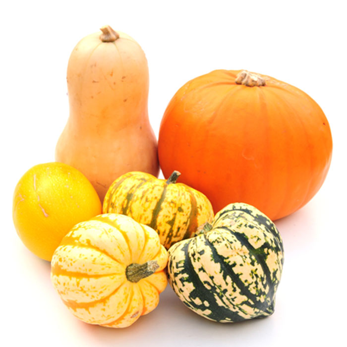 Pumpkin Is a Type of Squash