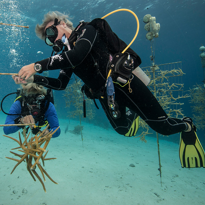 Scuba—and Save Coral Reefs in Bonaire
