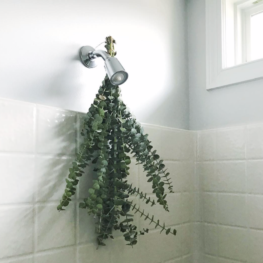 Why You Should Hang Eucalyptus In Your Shower Shape