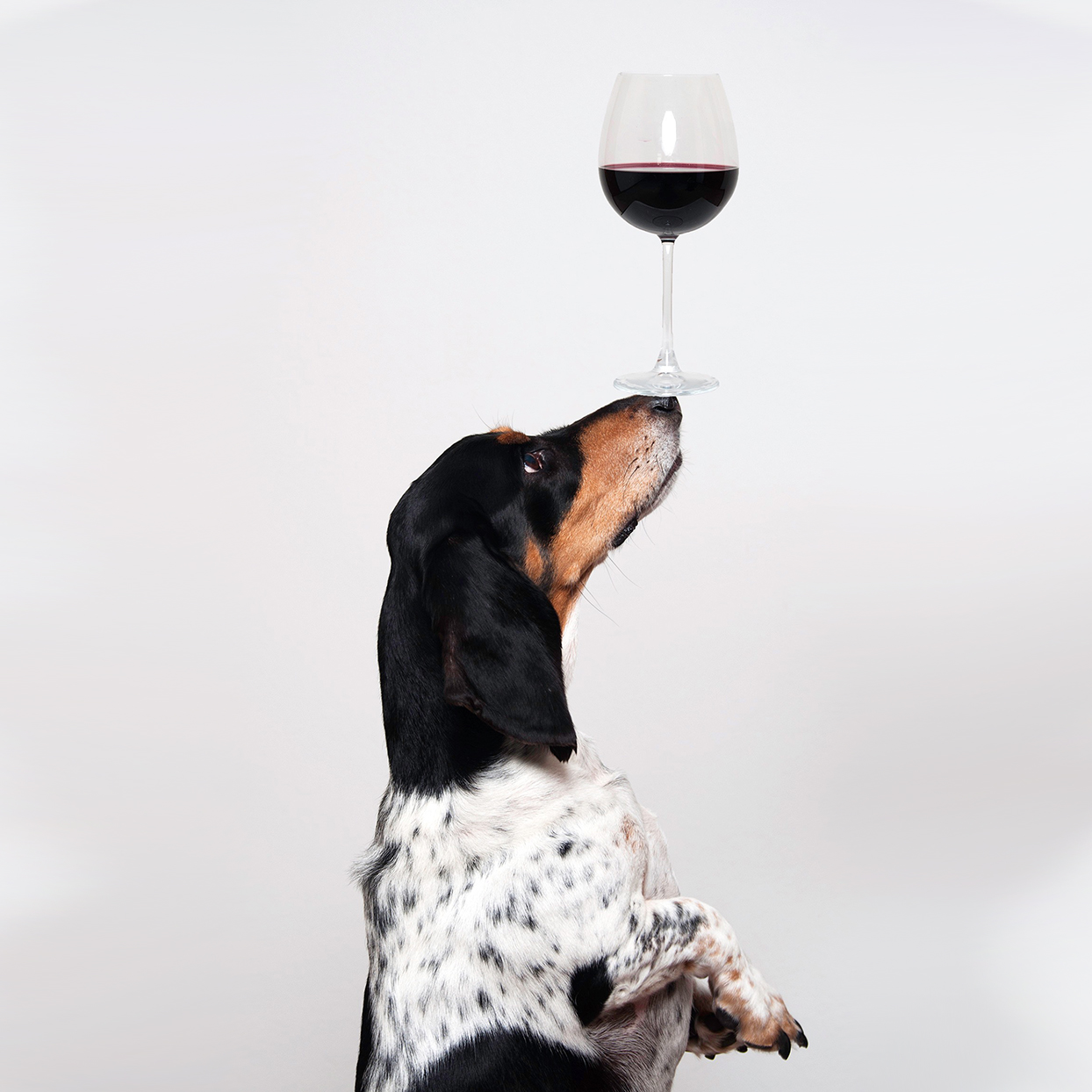 wine delivery dog