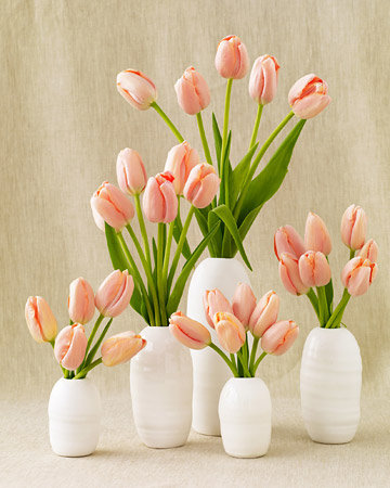 wd104357_win09_tulips.jpg