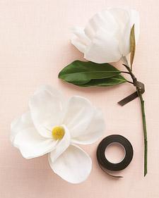 mwd104505_spr09_magnoliaht2_l.jpg