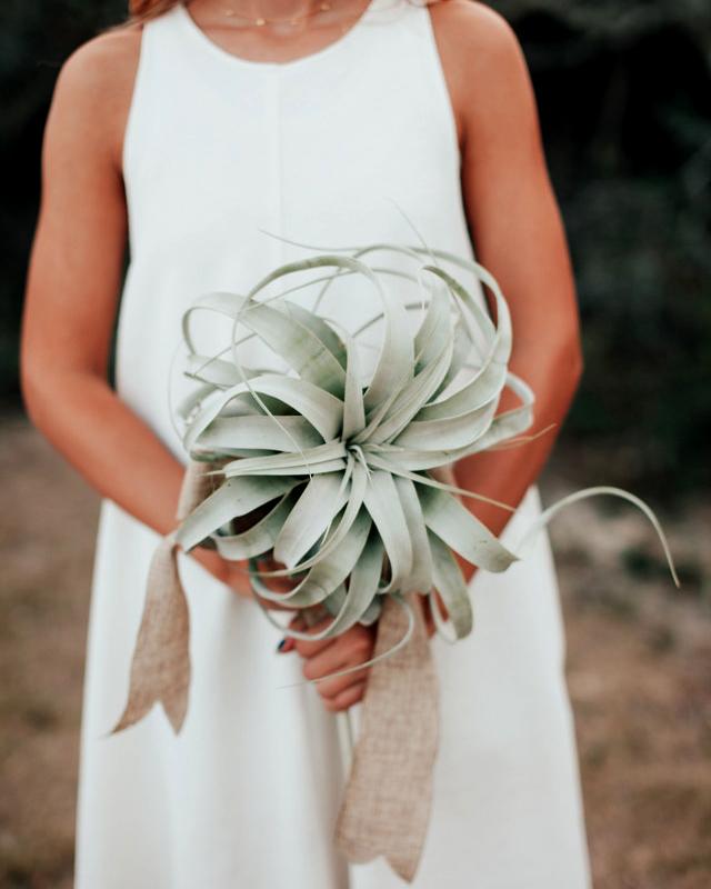 heat resistant bouquets air plant
