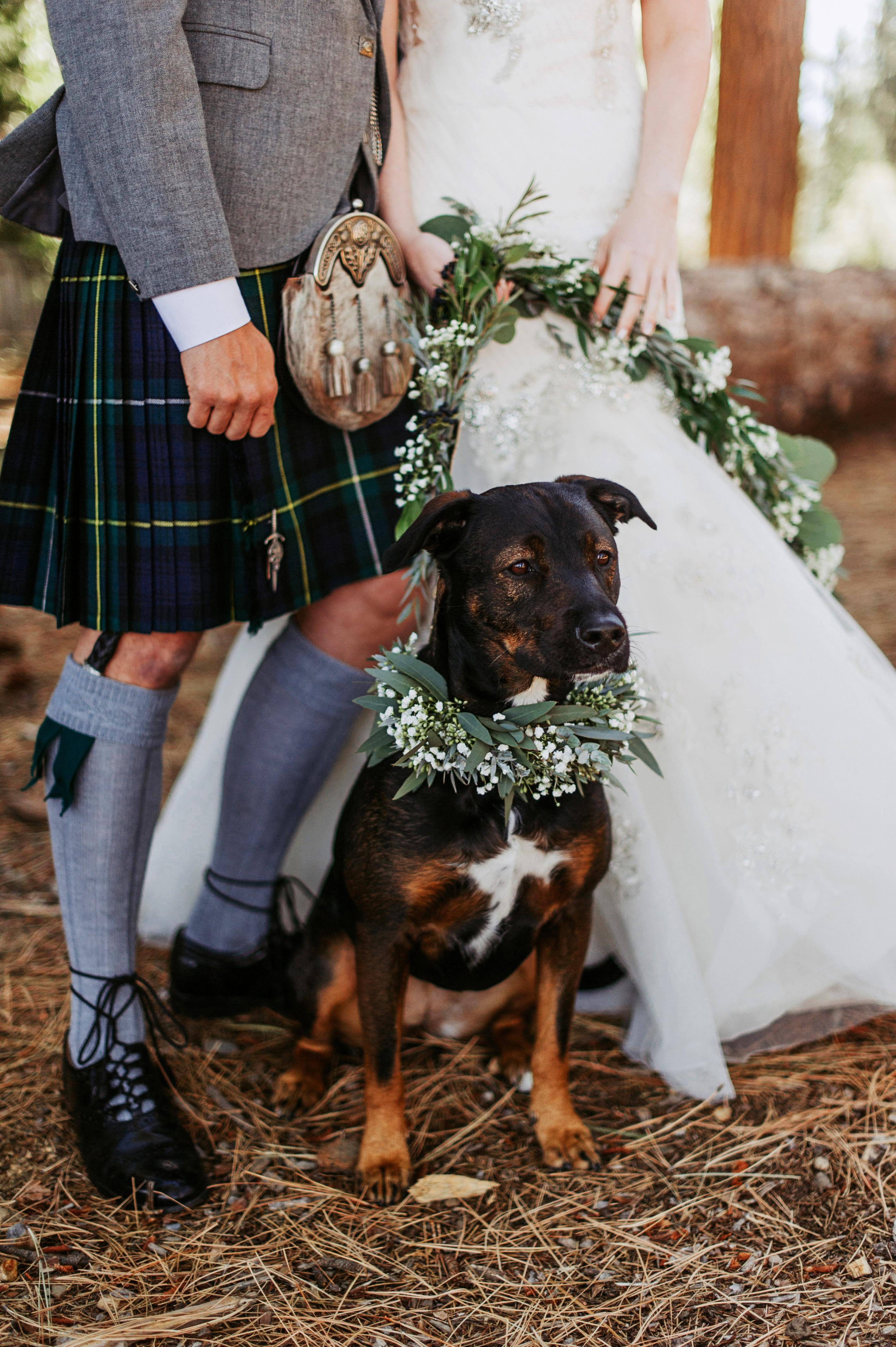 dog wedding bride groom couple feet garland collar
