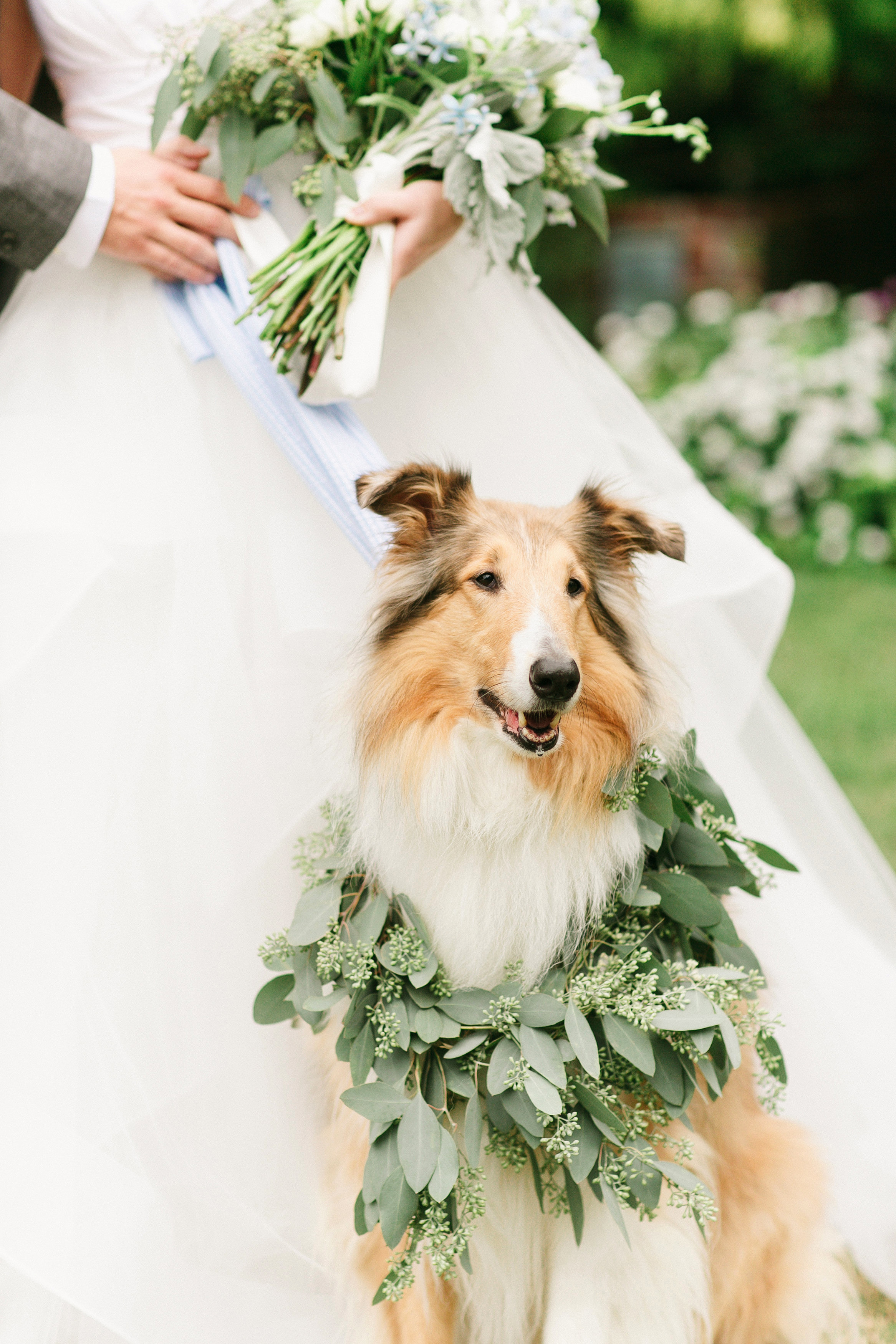 dog wedding bride collie garland wreath collar