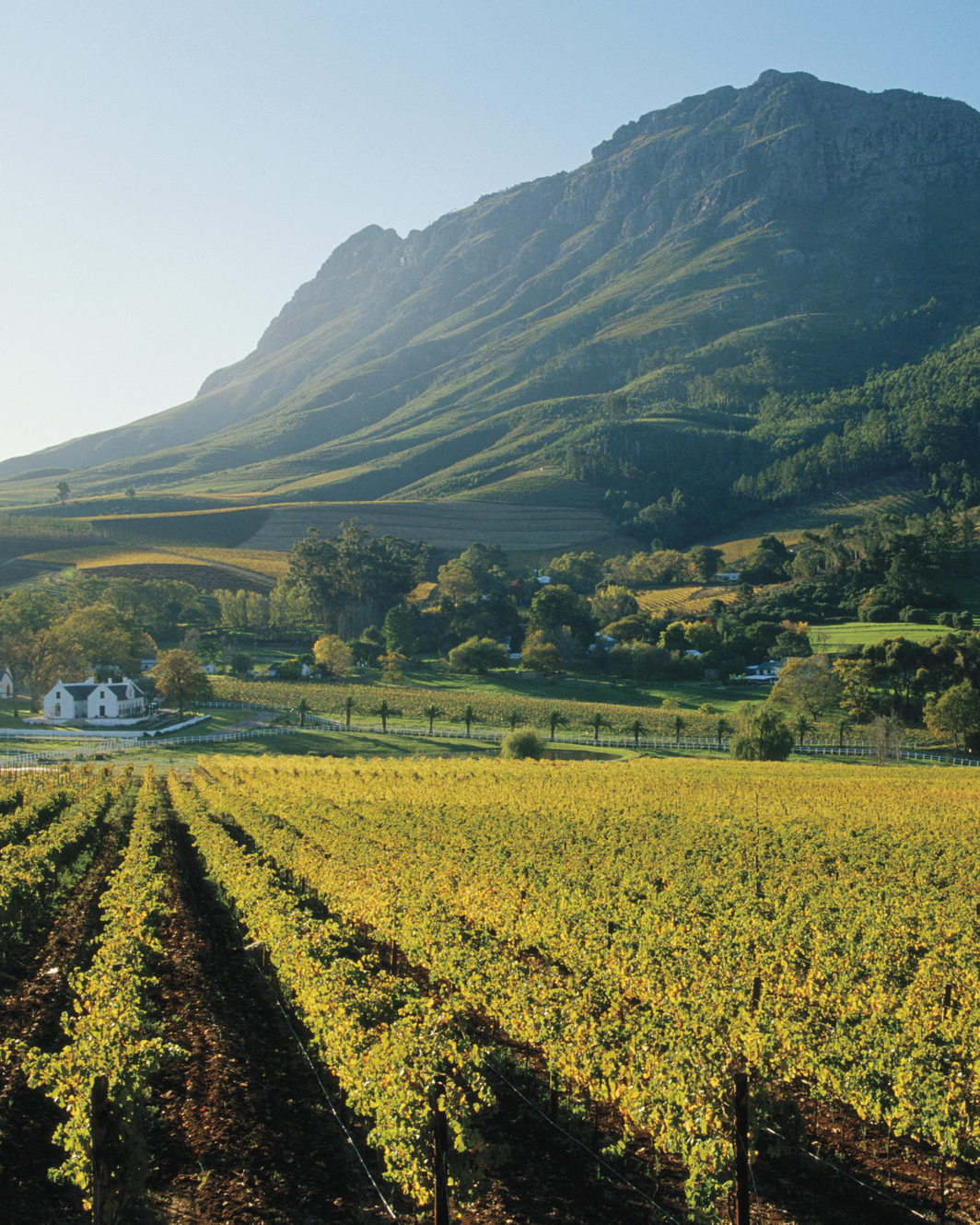 If You Love Napa:Try Cape Winelands