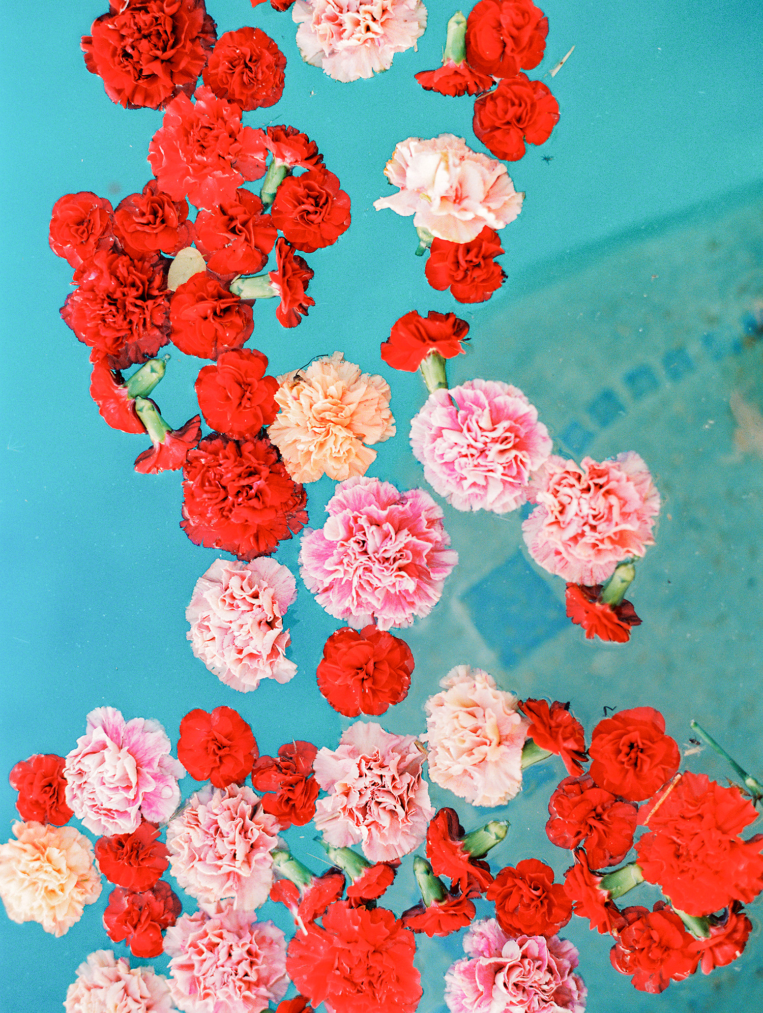 caitlin amit indian wedding flowers floating in pool