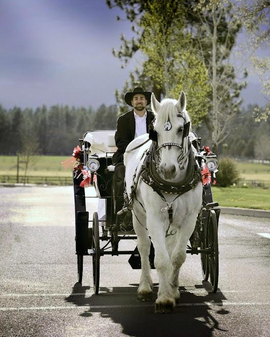 horsecarriage-msw-travel.jpg